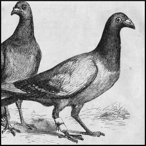 Source http://http://commons.wikimedia.org/wiki/File:Pigeon_Messengers_(Harper%27s_Engraving).png [Public Domain]